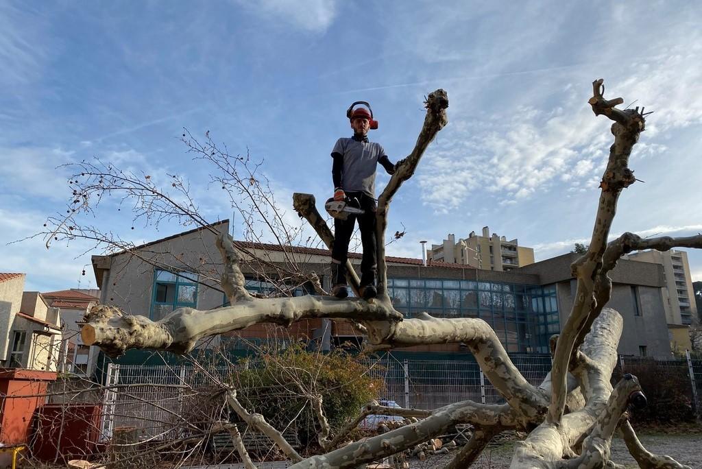 Abattage arbres