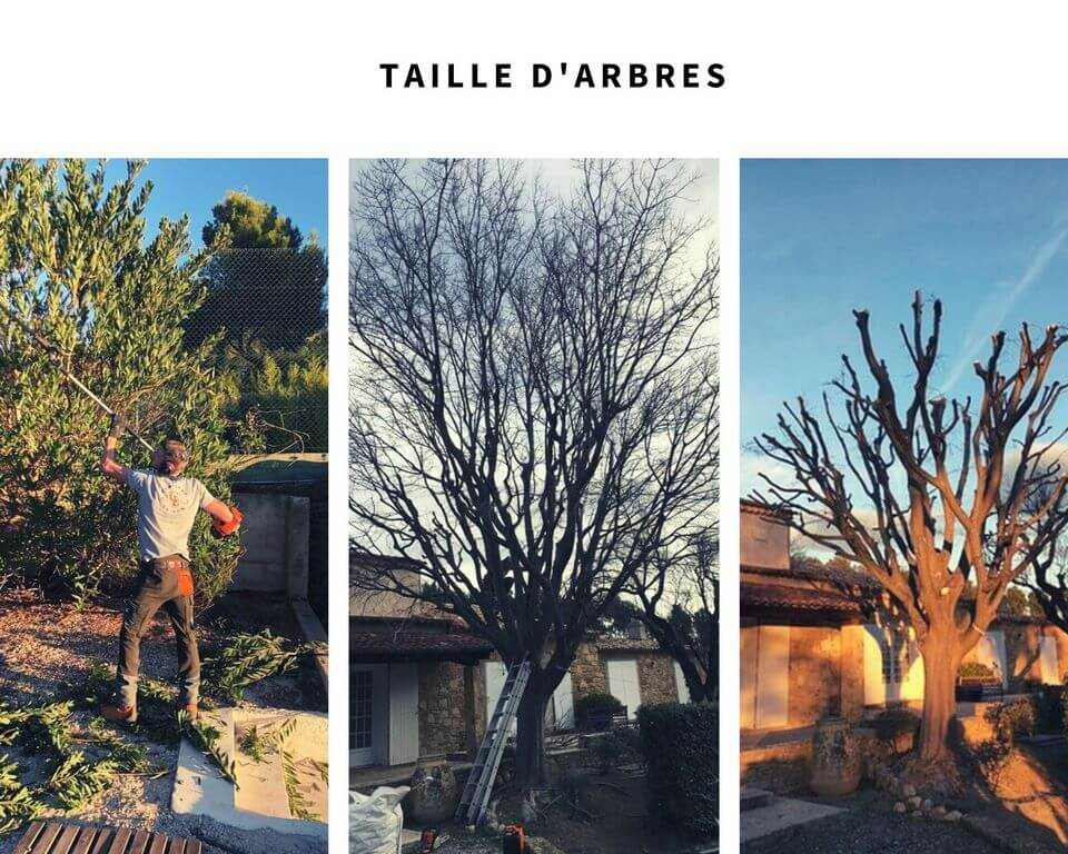 taille d'arbres